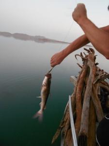 Fishing on Lake Argyle