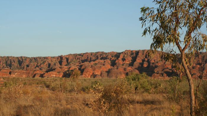 Viewing the Bungles on the way in