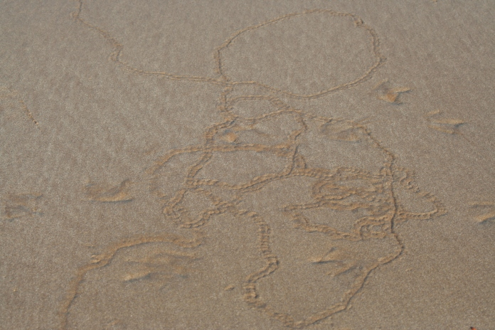 Little creatures in the sand leave traces