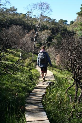 Darwin's trail