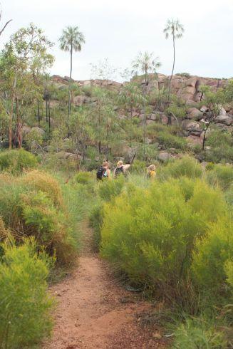 Bushy green, yellow landscape