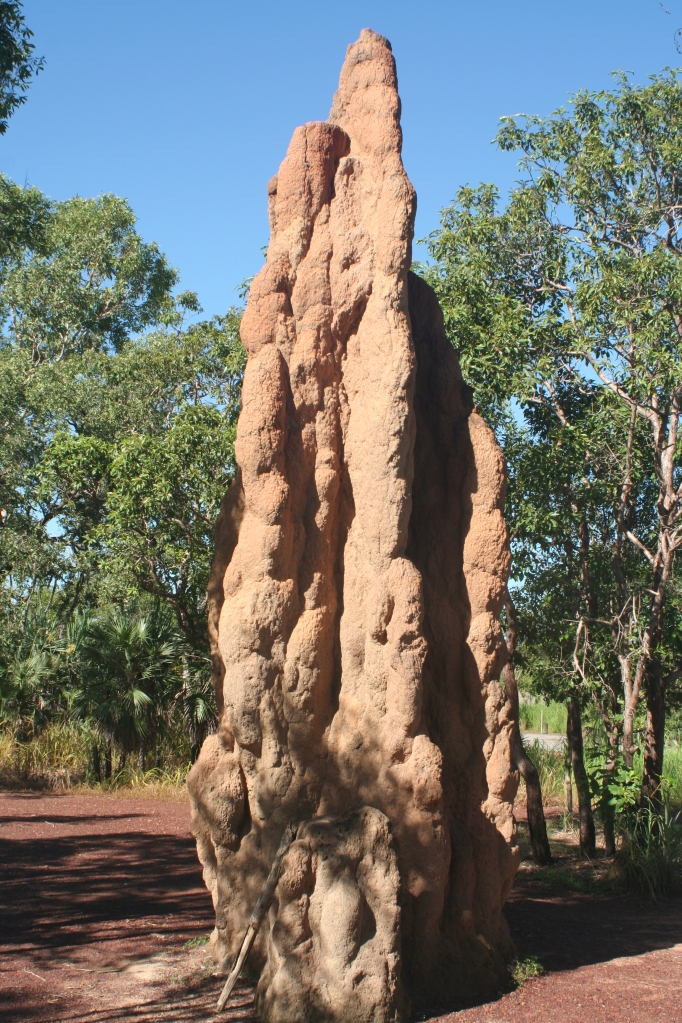 The holy grail of termite mounds: Cathedral