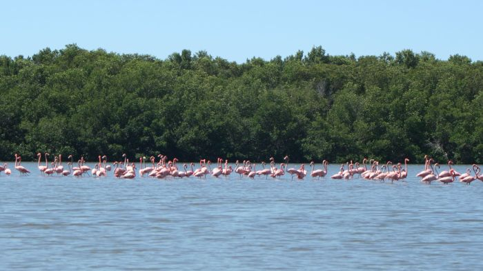 Flamingos in the lagoon.