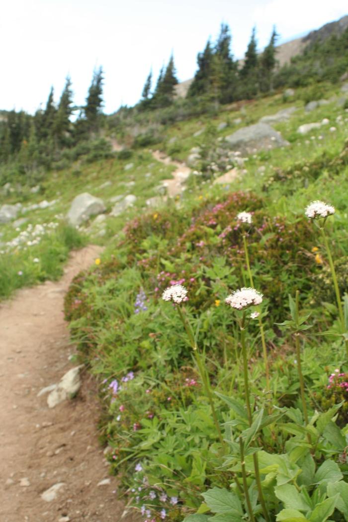Dreamy mountain paths.