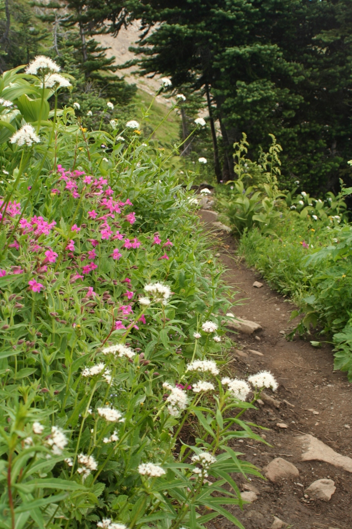 The path through the flowers.