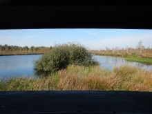 View from the bird watching hut