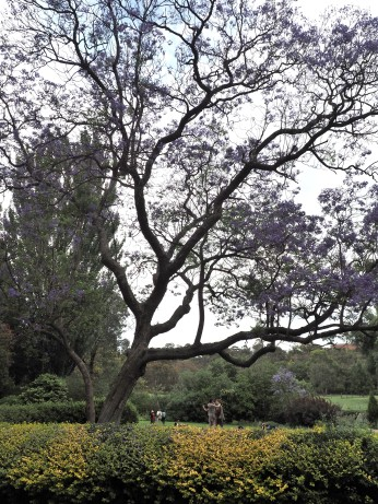 A beautiful tree in the gardens.